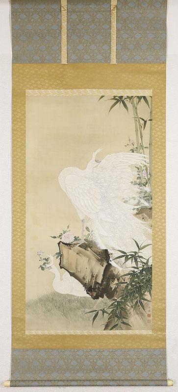 白孔雀之図