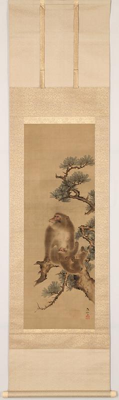 Monkeys on the Pine Tree